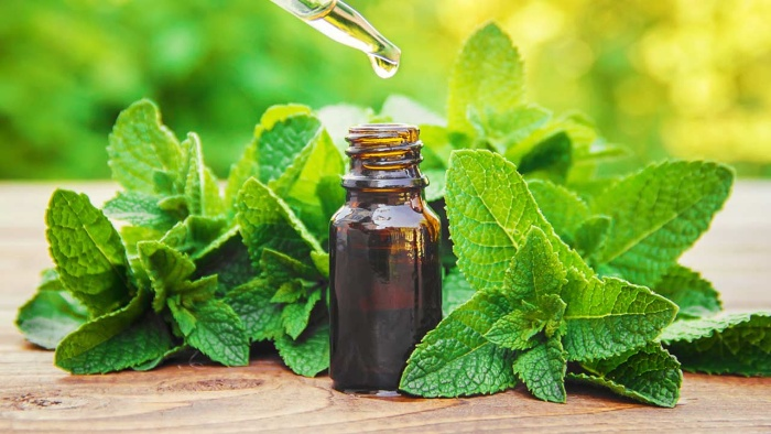peppermint essential oil with mint branches on a table