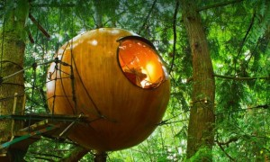 forest spheres