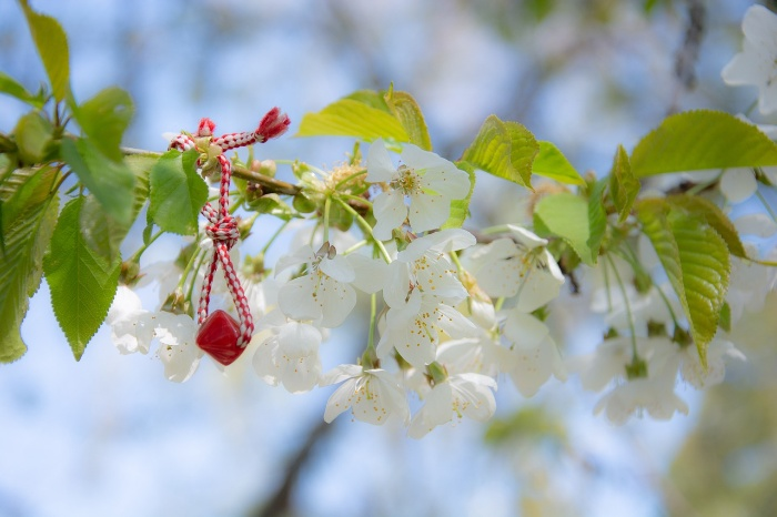 marteniza hanging from a blossoming tree branch in Bulgaria
