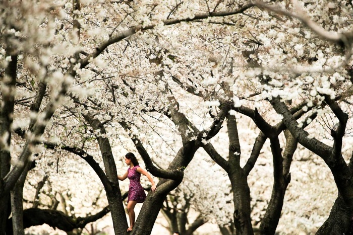 woman in spring on a tree blooming trees covered in white flowers