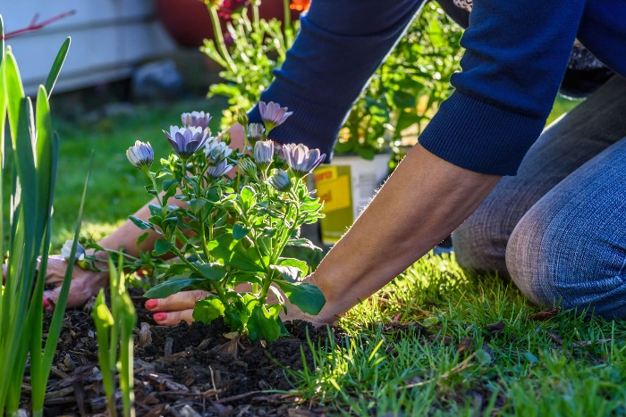 woman with blue shirt planting flowers in the garden
