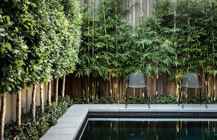 small japanese design pool surrounded by bamboo plants