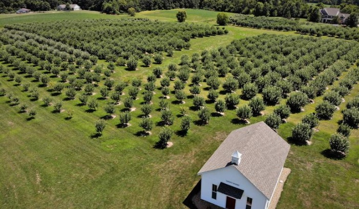 beautiful open orchard with many trees in rows and a white house