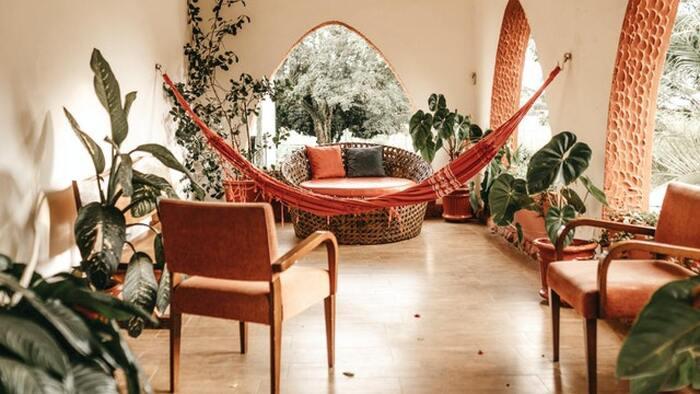 biophilic design boho living space with a hammock living plants