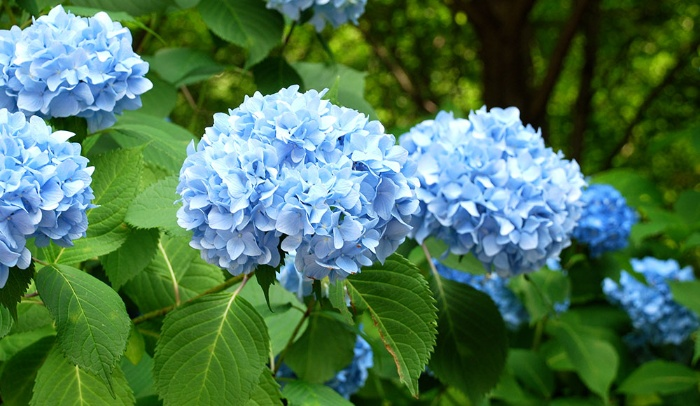 blue flower with bright green leaves outdoors