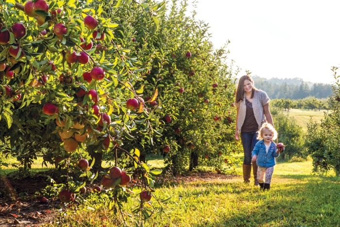 family orchard mother with her toddler running along the apple trees