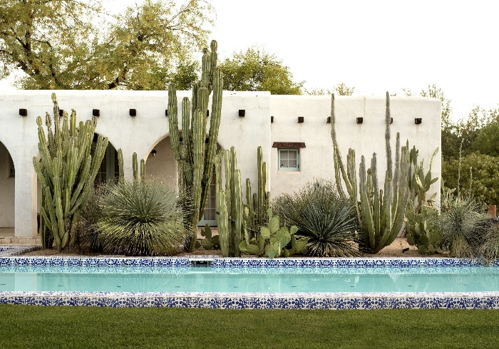 graden pool with colorful tiles and large cacti