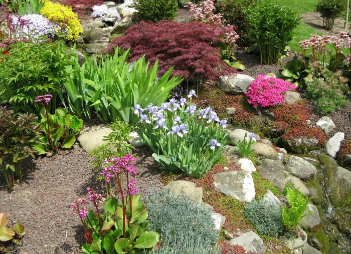 hill flower with different plants stones and rocks