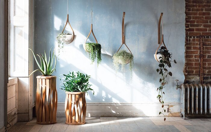 home green biophilic interior design living plants hanging from the ceiling