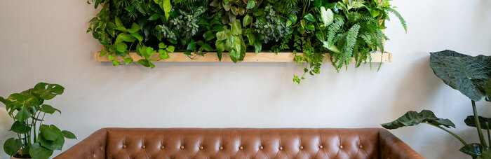 interior home design brown sofa with a shelf full of green living plants