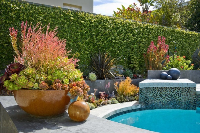 pool surrounded by succulents in large pots and green fence