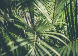 What Are Different Types of Tropical Plants That Exist Today (1)