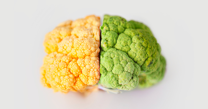 cauliflower yellow and green in the shape of a human brain on a white background
