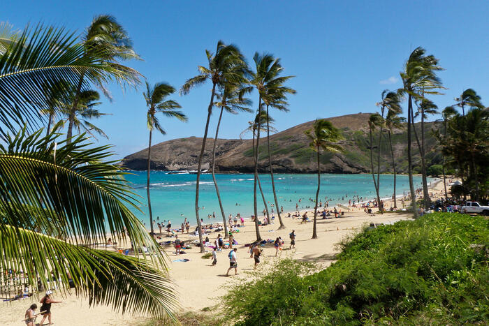 Hawaii beach with tall palm trees light blue waters