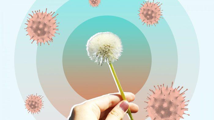 pollen allergies hand holding a dandelion with allergenic cells around it