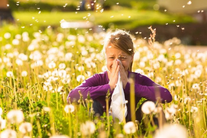 hay fever little girl in purple top in the middle of a field with dandelions holding her nose and face