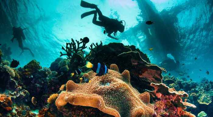 diving in the philippines two divers and a colorful sea bottom with tropical fishes