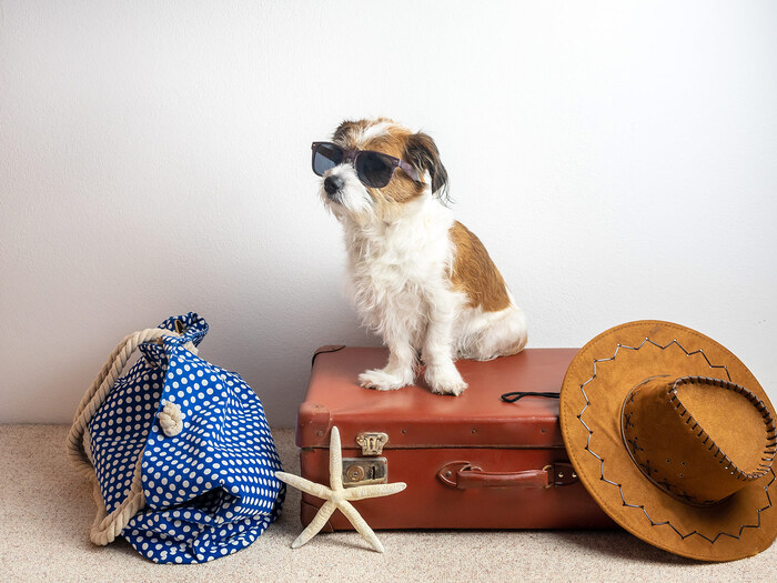 dog with sunglasses ready for vacation sitting on a brown suitcase with a hat and a blue dotted beach bag