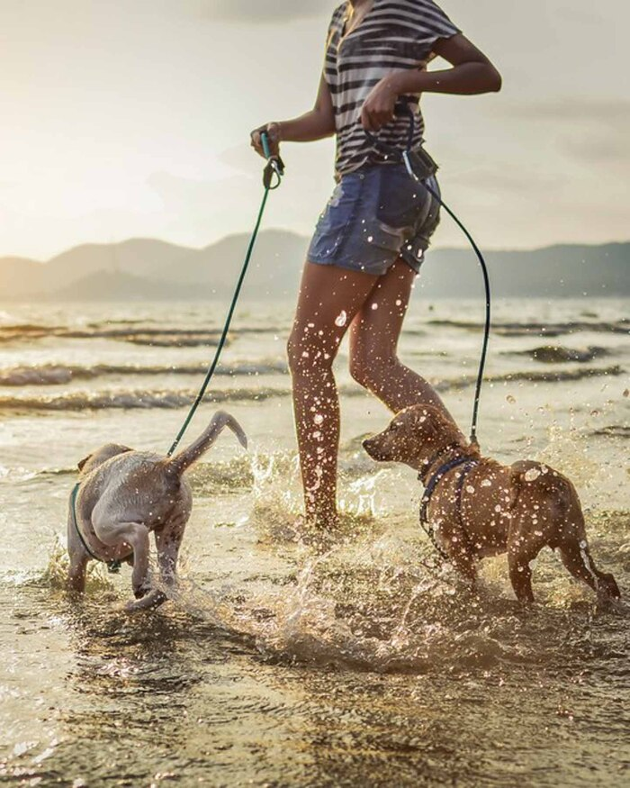 on the beach with the dogs woman running in the sea with two little dogs on leashes
