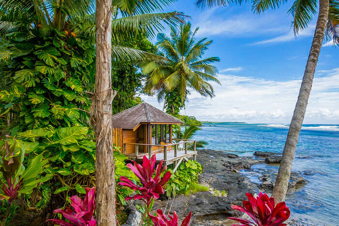 exotic landscape with large pink plants and tall palm trees and a wooden cabin on the rocks right next to the ocean