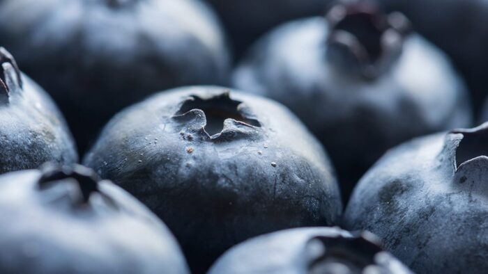 nutrition blueberries close up photo