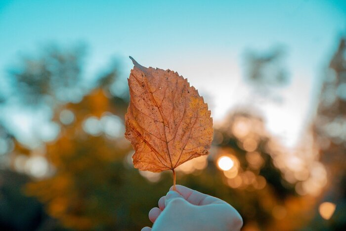 body seasons hand holding a fall leaf with a blue sky in the background