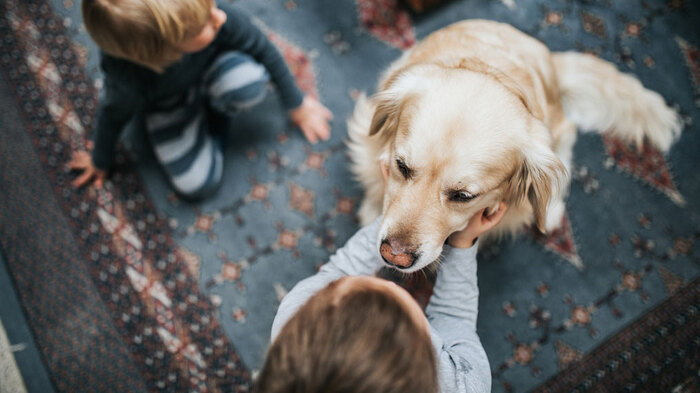 dog owners little kids playing a light blue carpet with a large golden retriever