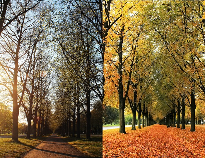 change of season comparison of the same park lane in spring and autumn