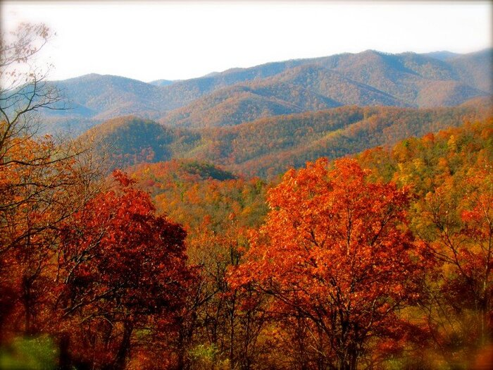 tenesee fall nature landscape colorful foliage trees and mountains